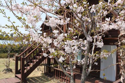 Jeju-do Log Cabin Pension 대표이미지