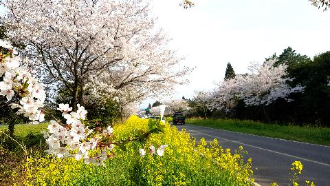 April in Jeju: Spring sights and scents 대표이미지