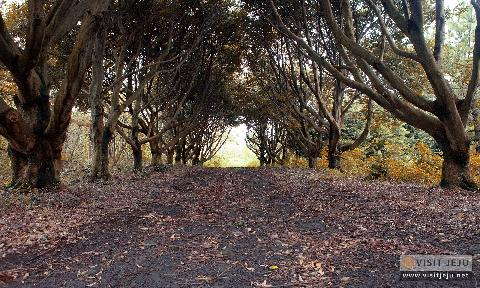 Deokcheon Palja Choagil Path 대표이미지