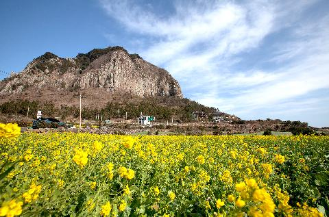 10 Top Travel Spots for March <Dazzling beauty strolling among spring flowers> 대표이미지