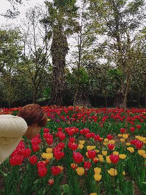 #한림공원 #튤립축제 #협재 #한림