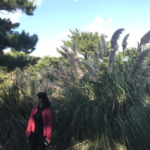 #제주가을 #한림공원 #팜파스