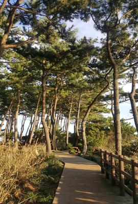 #가을제주명소#서귀포외돌개