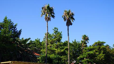 한립읍의 아열대식물원<br>#한림공원 #식물원