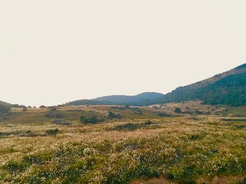 표선면 가시리의 유채꽃프라자에서 본 제주의 가을풍경. <br><br>커다란 풍력발전기로부터 흘러나온듯한 <br>제주의 바람은<br>벨벳같은 억새밭이 광이나도록 흔들고<br>수줍은 듯 발그레한 노을은 <br>저 멀리 보이는 것이<br>구름인지 산의 능선인지 수평선인지 모르게 <br>제 마음을 흔들어 놓았던 날이었습니다.<br><br>#제주가을 #표선면 #가시리 #녹산로 #유채꽃프라자