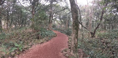 깨끗하고 고요한 원시의 숲속 산책. 비자나무에서 피톤치드와 테르팬이란 성분이 나오는데 정말로 몸으로 체감될만큼 기분이 상쾌하고 좋았어요. 꼭 다시 가보고 싶은 곳!