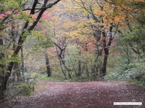 처음만나 제주의 가을 사려니숲길은 나를 행복의 숲으로 인도하여 주었습니다. 기대하지 않았다가 만난 사려니숲길의 가을은 '가을'의 모습을 그대로 간진한 태고의 모습 그대로였습니다. 행복을 느끼고 싶다면 사려니숲길로 오세요