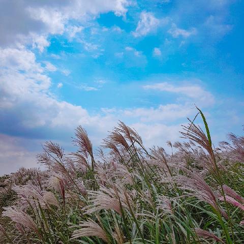홀로 여행! 푸른하늘과 맞닿은 새별오름-! 억새들이날리고 맑은공기마시며 힐링~