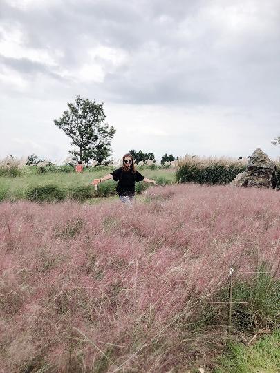 아들.딸과함께 3박4일간 제주여행을 왔습니다. 우도 들렸다  들린 카멜리아힐은 가을작품 그대로 였어요.분홍빛 핑크뮬리가 함박웃음으로 반겨줬어요 시간 가는줄 모르고 가을을 만끽하고 즐거운추억 안고 일상으로 돌아갑니다. 굿바이제주..다음에 또 만나요♡