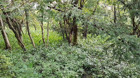 비자나무 열매의 향에 취해 힐링의 시간을 보냈어요