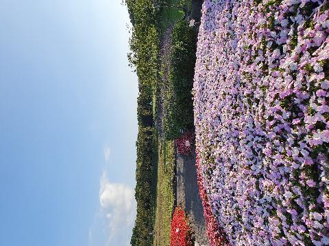 8월에 가족들과 함께갔던 에코랜드~ 역마다 특색있고 잘 가꿔져 있어 동화속 같아서 내내 즐거웠어요! 핑크톤의 정원이 너무 아름다웠습니당♥