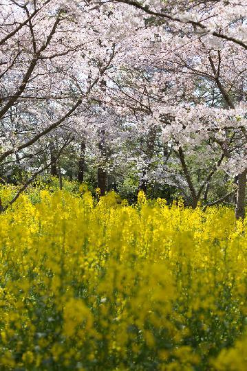 봄에 찾아간 멋진곳 두가지 색채의 조화~