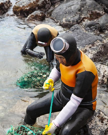 Haenyeo: Culture, History, and the Freshest Seafood <Discover the Remarkable Free Diving Women of Jeju> 대표이미지