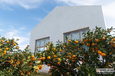 Savor a fresh experience: Jeju mandarin orchard cafes 대표이미지