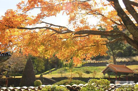 아늑하고 따듯한 <가을에 푹 빠진 제주 풍경> 대표이미지