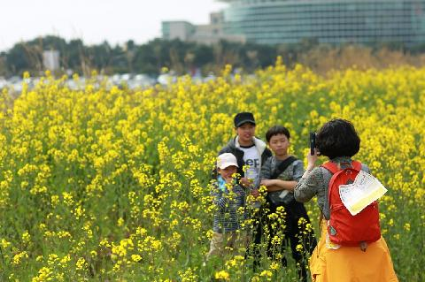 Seogwipo Canola Flower International Walking Festival 대표이미지