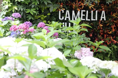 Camellia Hill 대표이미지