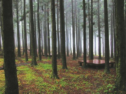 済州チョルムル自然休養林 대표이미지